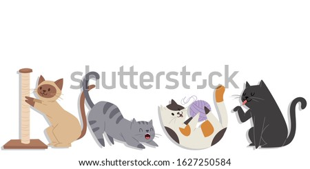 cute cats of different breeds
