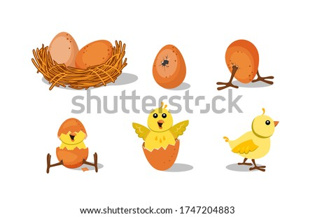 Cute chick hatching set. Chicken nest with egg, broken egg shell, baby bird. Vector illustration for farming, Easter, poultry concepts Stockfoto ©