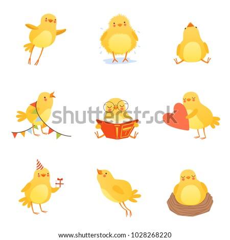 cute chicken in various
