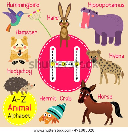 Cute children zoo alphabet H letter tracing of funny animal cartoon for kids learning English vocabulary.