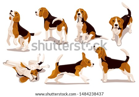 Cute cool beagle puppy set. Collection of flat dog in various poses and actions. Vector illustration of domestic pet behavior Zdjęcia stock ©