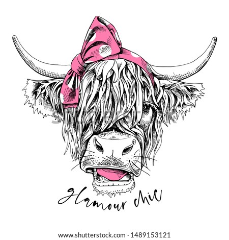 Cute cow (Hairy Coo) in a pink polka dot bow headband. Glamour chic - lettering quote. Humor card, t-shirt composition, hand drawn style print. Vector illustration.