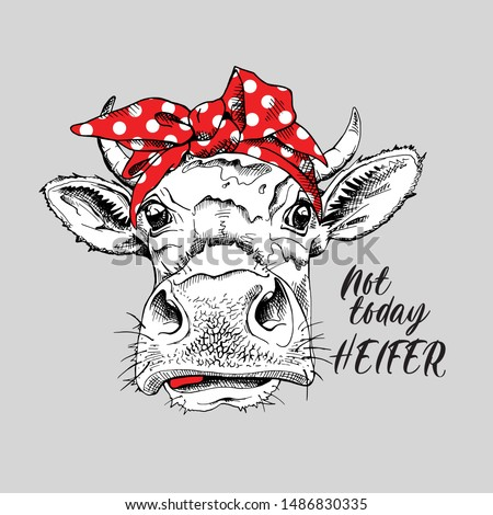 Cute cow in a red polka dot headband. Not today heifer - lettering quote. Humor card, t-shirt composition, hand drawn style print. Vector illustration.