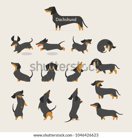 cute dachshund various