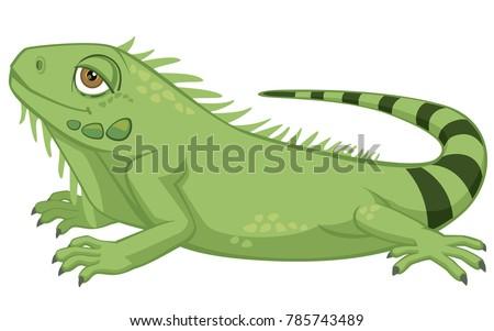 cute detailed pet iguana...