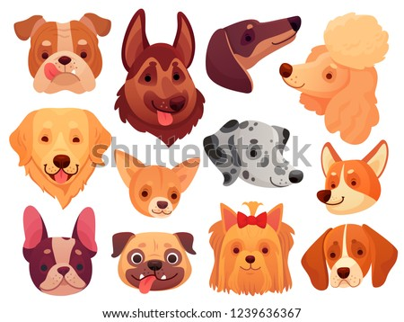 Cute dog face. Puppy pets, dogs animals breed and puppies heads. Funny retriever corgi poodle terrier and dalmatian. Ddomestic dog pedigree cartoon vector illustration isolated icons set