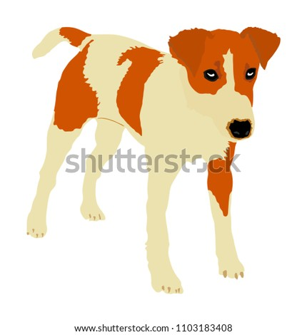 cute dog portrait vector