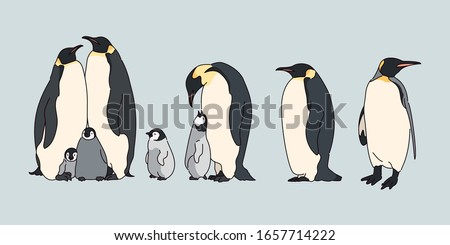 Cute Emperor Penguin. Realistic drawing. hand drawn style vector design illustrations.  Сток-фото ©