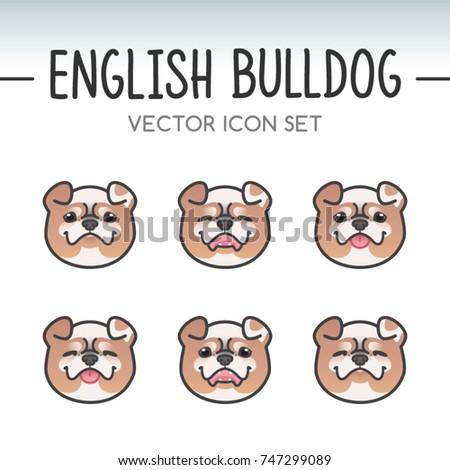 cute english bulldog breed
