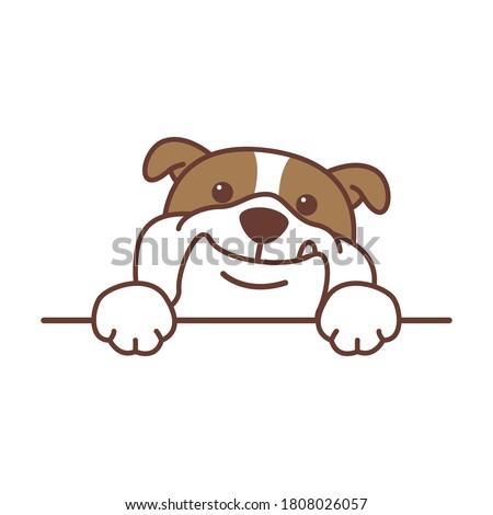 Cute english bulldog paws up over wall, vector illustration Stock photo ©