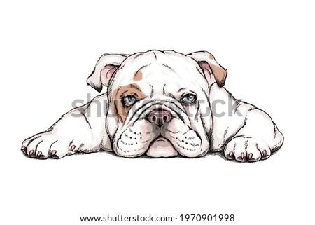 Cute english bulldog sketch. Vector illustration in hand-drawn style Stock photo ©