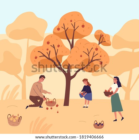 Cute family picking apples in garden vector flat illustration. Happy mother, father and daughter gathering fruits from tree together. People putting organic seasonal growth edible plants in baskets