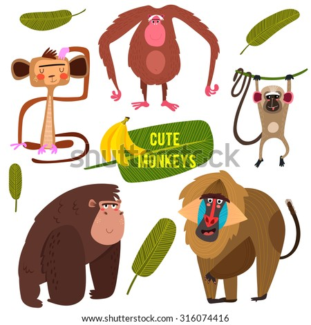 cute fife funny monkeys