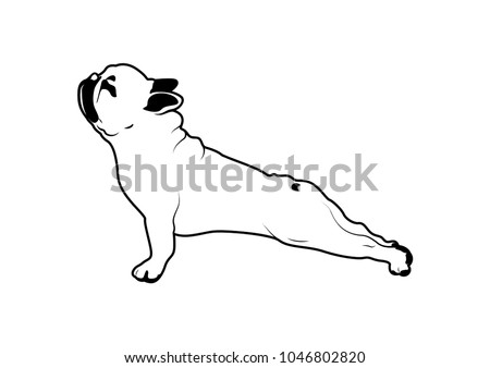 stock-vector-cute-french-bulldog-yoga-exercise-in-black-white