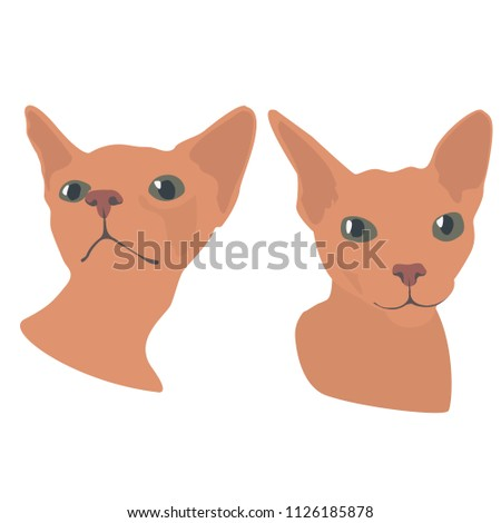 cute  funny  two cat sphinx