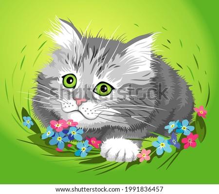 cute gray kitty in green grass