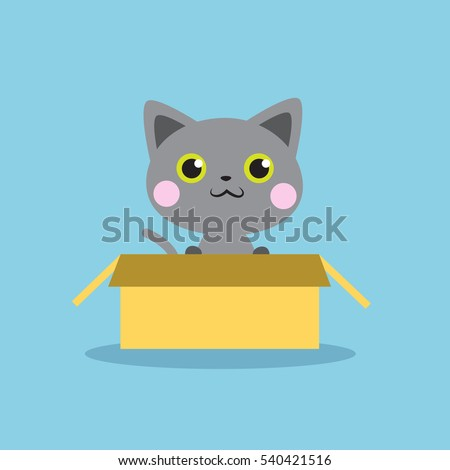 cute grey kitten in the box