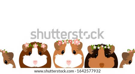 cute guinea pig or cavy with