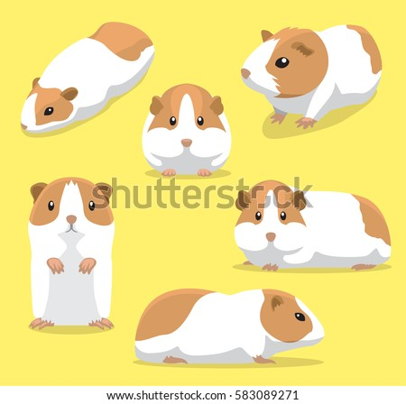 cute guinea pig poses cartoon