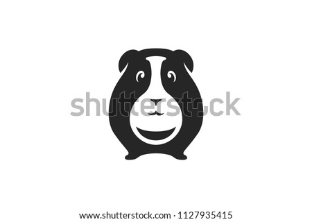 cute guinea pig with hidden