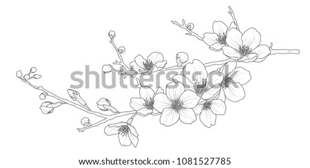 Cute hand drawn isolated sakura branch set 1. Flower vector illustration in black outline and white plane on white background.