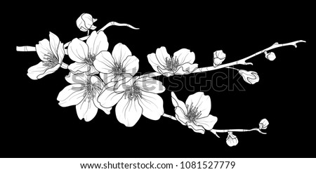 Cute hand drawn white silhouette sakura branch set 2. Flower vector illustration in white plane without outline on black background.