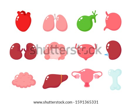 Cute human healthy organs set. Vector cartoon character illustration icon design. Isolated on white background. Heart, liver, brain, stomach, lungs, kidneys,intestine,uterus organ