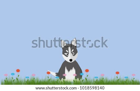 cute husky puppy sitting on a