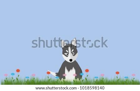 cute husky puppy sitting on a