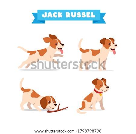 cute jack russel dog animal pet