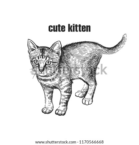 cute kitten home pet isolated