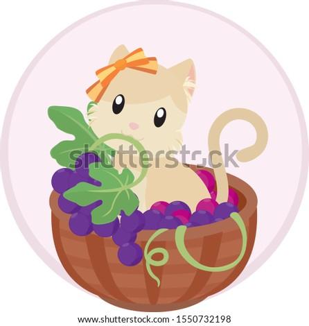 cute kitten in grape basket