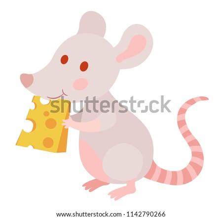 cute laboratory albino rat eats