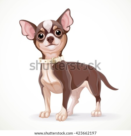 cute little dark chihuahua dog
