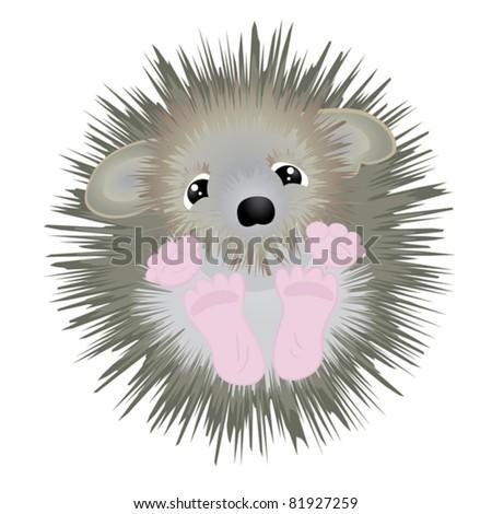 Cute little hedgehog - vector illustration