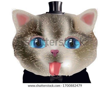 cute little kitten in top hat