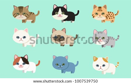 cute pet cat breed collection