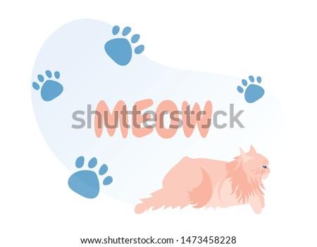 cute pink fluffy persian cat