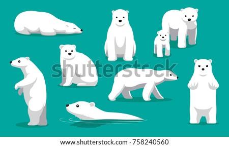 cute polar bear swimming