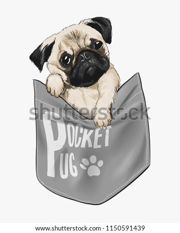 cute pug in shirt pocket illustration Сток-фото ©