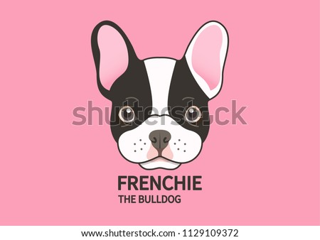 Cute puppy french bulldog face on pink background.