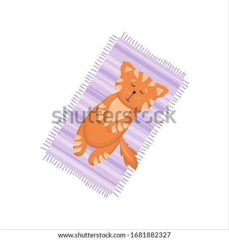 cute red cat  kitten lying on