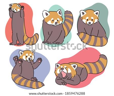cute red panda in various poses