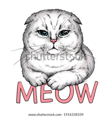 cute scottish fold cat meow