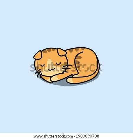 cute scottish fold cat sleeping