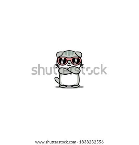 cute scottish fold cat with