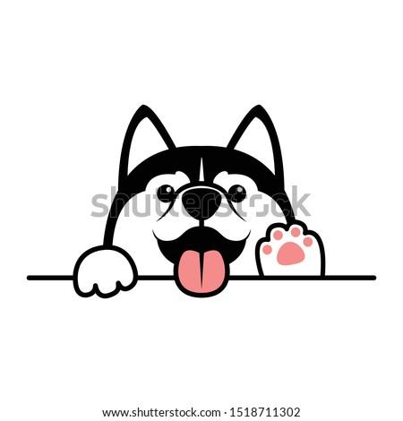 cute siberian husky dog paws up