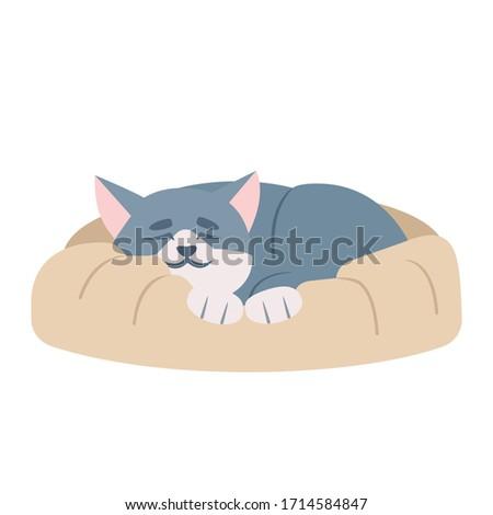 cute sleeping cat semi flat rgb