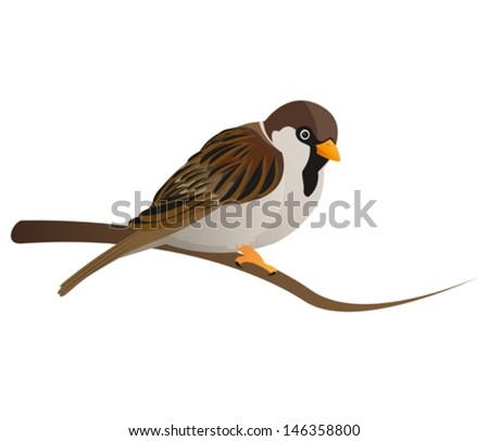 cute sparrow sitting on tree