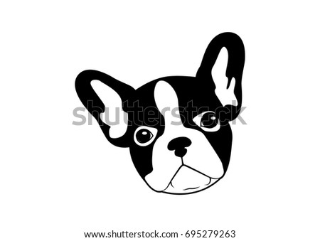 cute two tone french bulldog